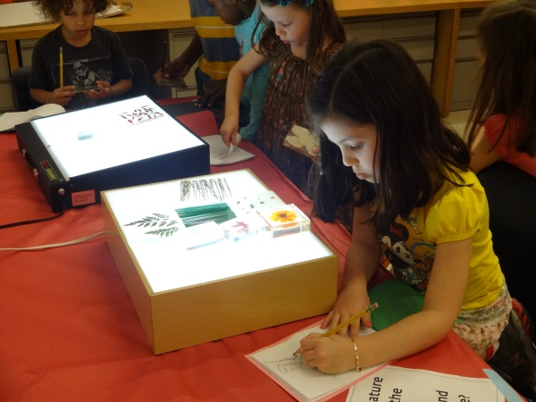 Investigating nature samples on a light box