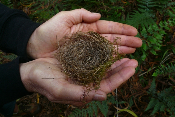 Janeil collects items from nature – such as bird nests that she discovers on the ground – by photographing the item in her hands.