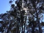 trees taken byyouth