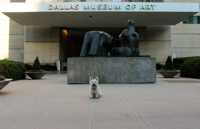 I'd say I'm the perfect welcome dog for the DMA!