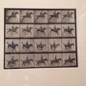 """""""Horse in Motion"""" by Eadward Muybridge. Absolute fav. Early foray into motion photography."""